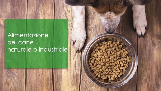 Alimentazione del cane naturale o industriale