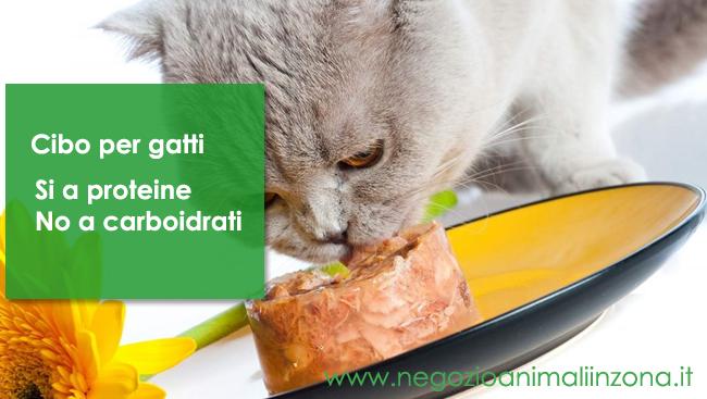 Cibo per gatti : si a proteine no carboidrati