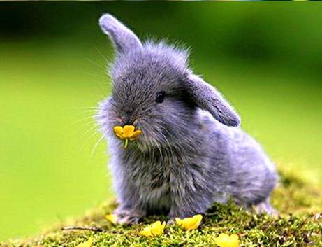 Coniglio nano cibo e abitudini