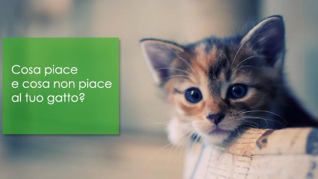 Cosa piace e cosa non piace al tuo gatto?