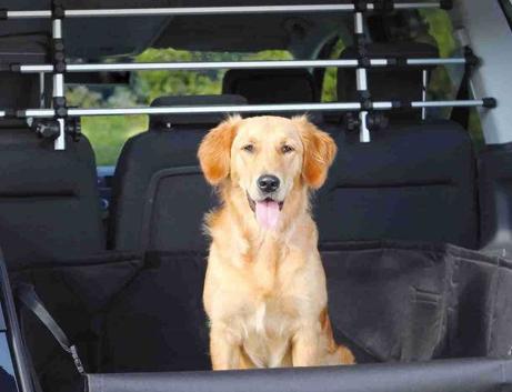 Le regole per trasportare il cane in auto