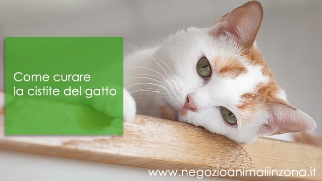 Come curare la cistite del gatto