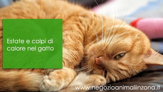Estate e colpi di calore nel gatto