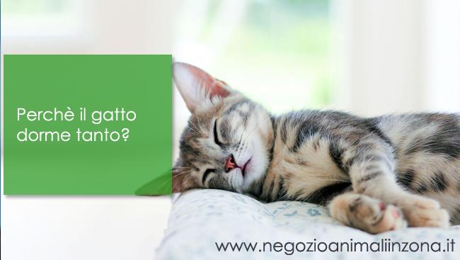 Perchè il gatto dorme tanto?