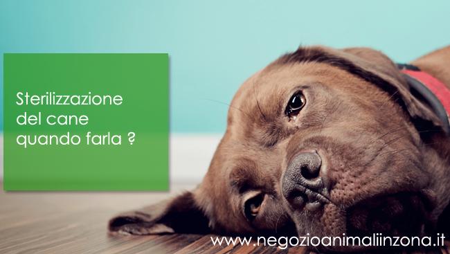 Sterilizzazione del cane quando farla ?