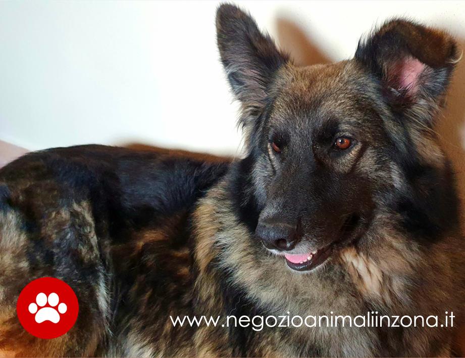 Pet Therapy le razze di cani più usate