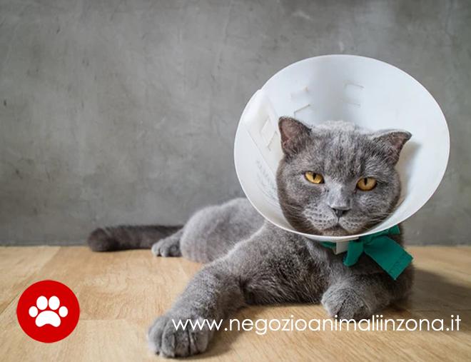 Sterilizzazione del gatto, cos'è e quanto costa?