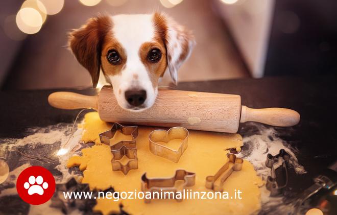 Dolcetto o non dolcetto al nostro cane?