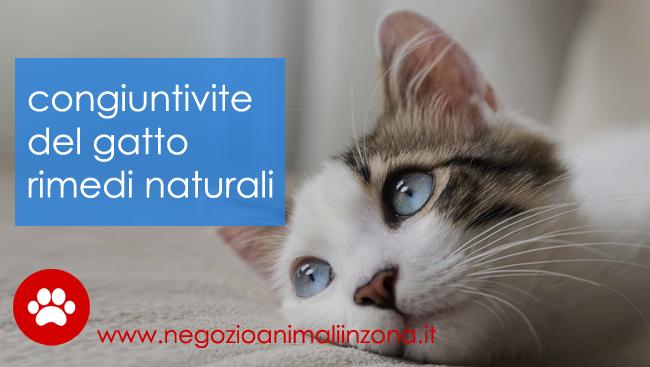 Congiuntivite gatto rimedi naturali o farmaci