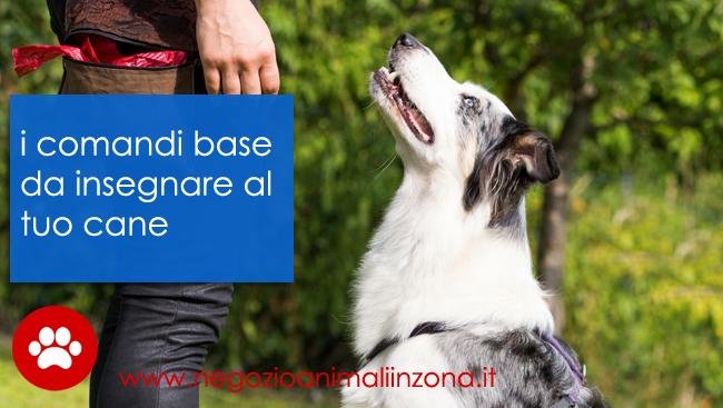 addestramento cani i comandi di base da insegnare al tuo cane