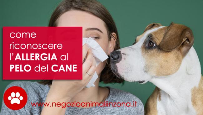 Allergia al pelo del cane sintomi e rimedi