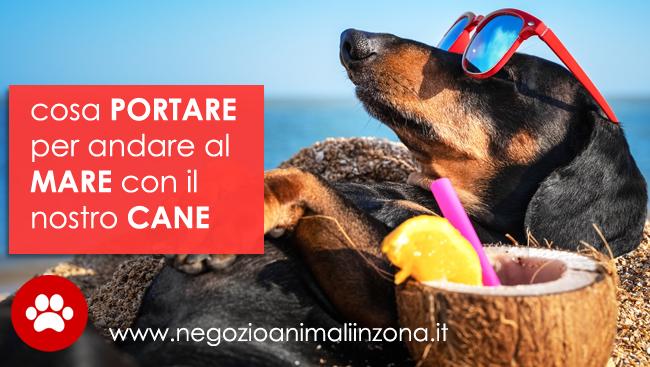 In spiaggia con il cane , regole ed accorgimenti